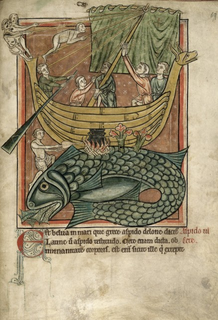 Marineros fondeando en el lomo de una ballena - Bestiario del s. XIIII (1230-1240) British Library, Harley MS 4751, f. 69r